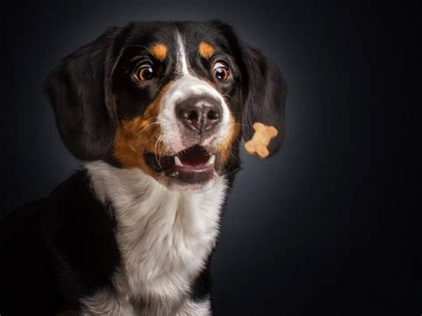 funny expressions  hungry dogs faces