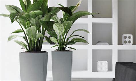 indoor plants no light executive office artificial plants indoor office plants