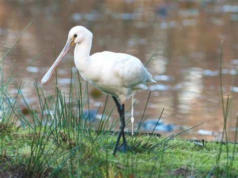 La réserve ornithologique du Teich Guide Tourisme & Vacances
