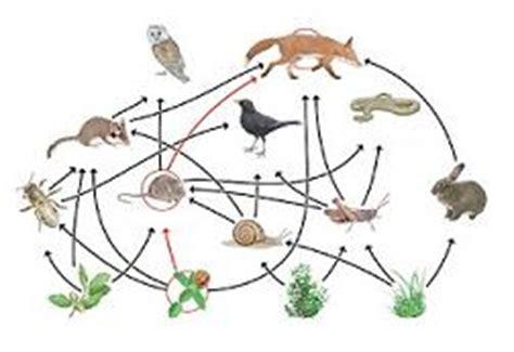 que son las cadenas y redes alimentarias wikipedia opiniones de red tr 243 fica