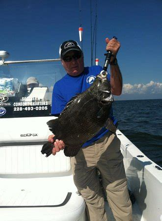 southern comfort fishing charters nice triple tail with southern comfort charters picture