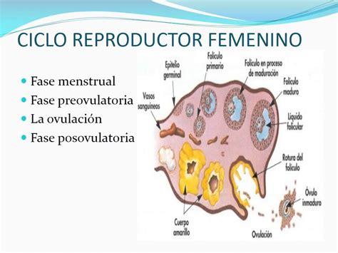 aparato reproductor masculino youtube aparato reproductor femenino youtube