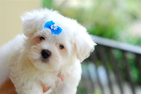 animals zoo park top 10 small dog breeds in america with photos pics