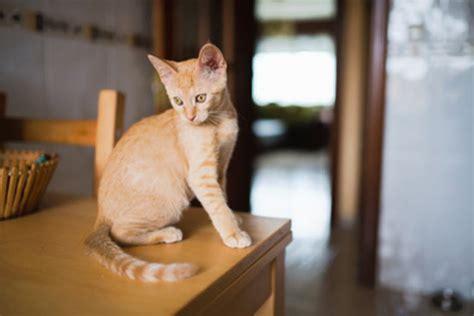 katze alleine halten wohnung meine katze ist ganzen tag alleine zuhause tierischehelden
