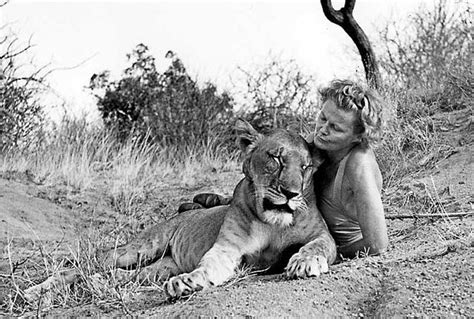 elsa film lioness 1000 images about elsa and the adamson on pinterest