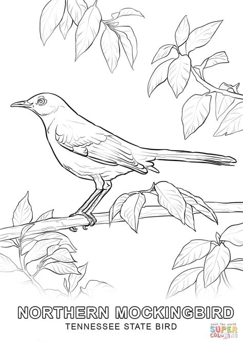 tennessee state bird coloring page free printable