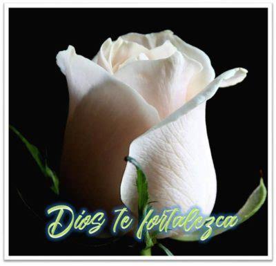 imagenes de luto y fortaleza mira estas 5 im 225 genes de rosas blancas con frases de luto