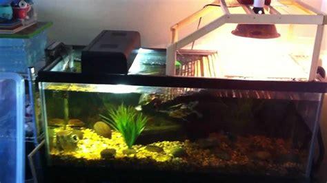 aquatic turtle basking light aquarium setup for two aquatic turtles res false