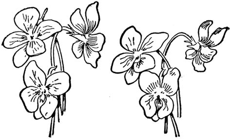 three violets clipart etc