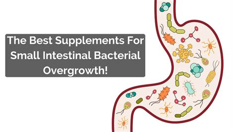 best probiotics for what are the best probiotics for sibo
