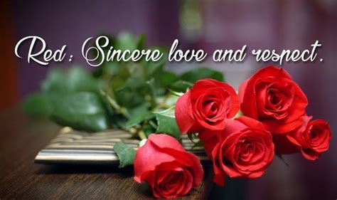 {7th Feb 2019}* Rose Day Images, GIF, HD Pics, 3D Photos