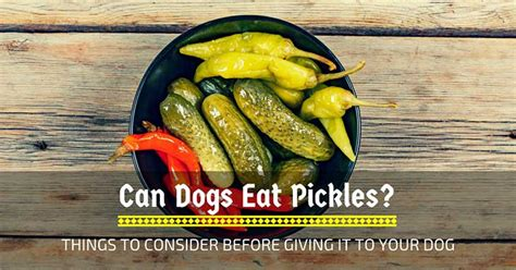 can dogs eat pickles can dogs eat pickles things to consider before giving it to your