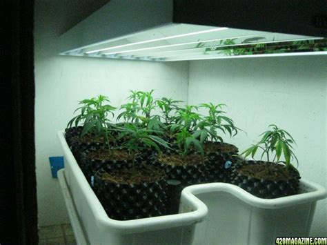 plant light show me your t5 fluorescent light grow