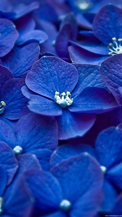 1080x1920 Flowers Blue White Wallpapers HD