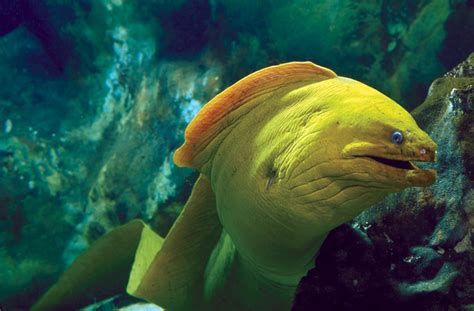 national aquarium green moray eel