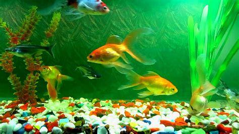 Aquarium Fish L by World Of Vastu Inc Vastu Consultations And Research Center Rewa Kumar Fish