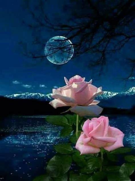 pin  patricia marsh  moonlight beautiful flowers