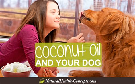 can dogs coconut coconut for dogs 7 ways healthy concepts with a nutrition bias