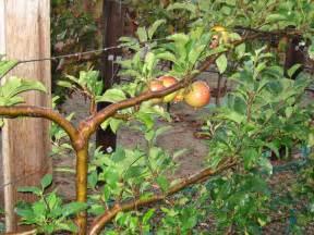 garden apple trees facebook cover kootation home ideas