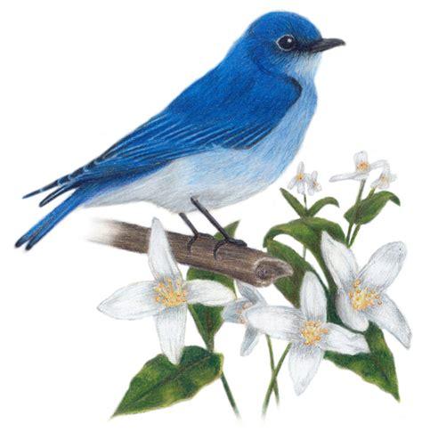 image gallery idaho bird