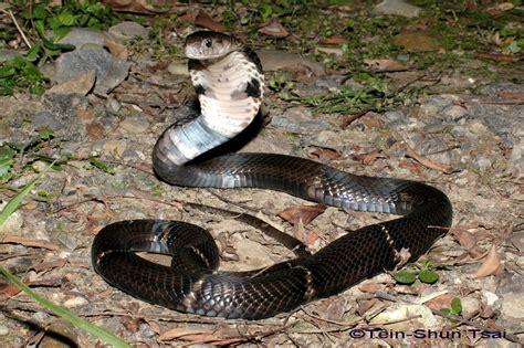 Serum Anti Bisa Ular zandt pengisi waktu luang gigitan ular sabu