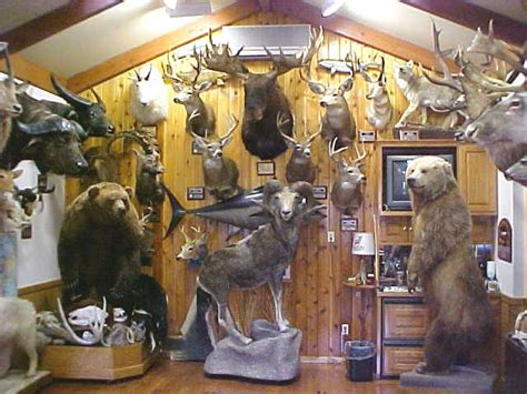 trophy room taxidermy trophy room services at northeast taxidermy studios