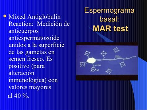 mar test factor masculino