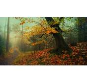 Nature Landscape Forest Path Fall Leaves Mist Trees