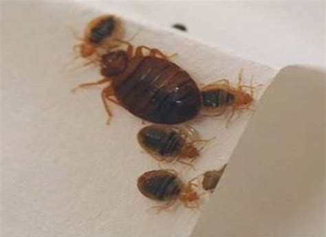 bed bug exterminator indianapolis bed bugs confirmed in indiana high school