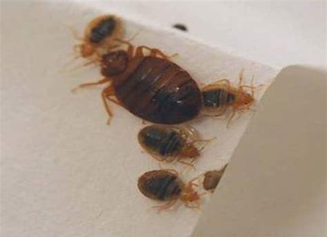 bed bugs confirmed in indiana high school