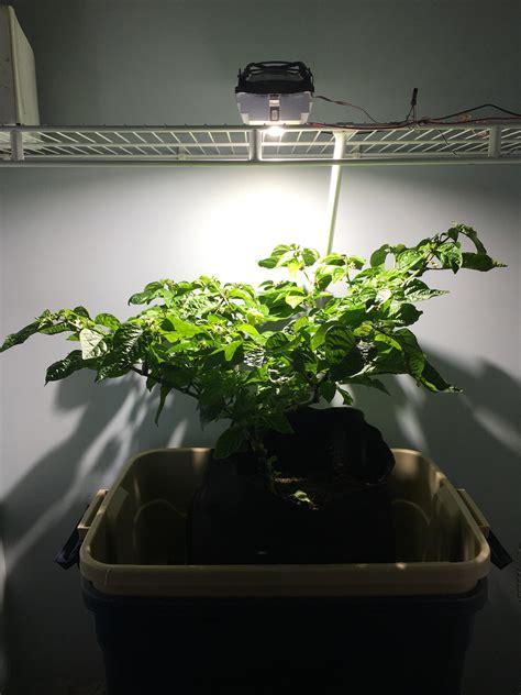 how to build a led grow light build an led cob grow light led gardener