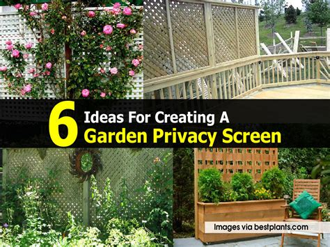 Privacy Garden Screening Ideas Garden Privacy Screen 17 Best 1000 Ideas About Outdoor Privacy Screens On Garden 17