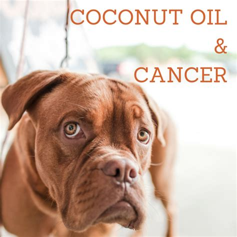 coconut and dogs can coconut fight cancer coconut for dogs