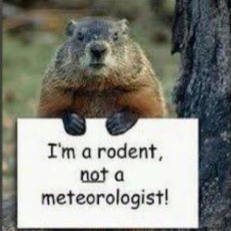 groundhog day yearly results 1000 images about ground hog day 2 2 15 on
