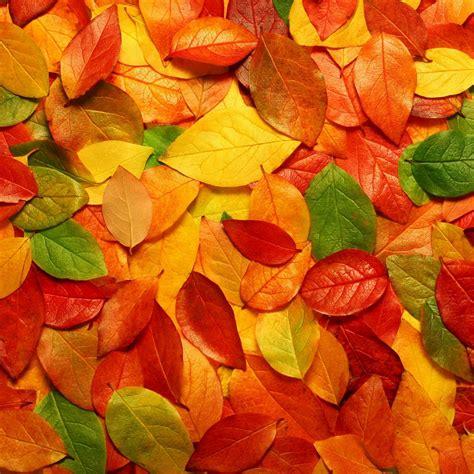 autumn ipad  hd wallpapers  ipad retina