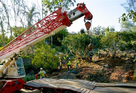 commercial trees commercial tree removal trimming services in san diego