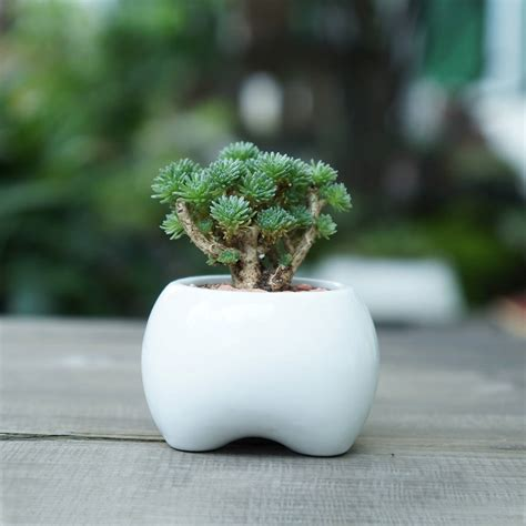 ceramic tooth shaped planter by dingading terrariums