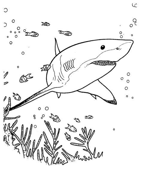 imagenes para colorear tiburon galer 237 a de im 225 genes dibujos de tiburones
