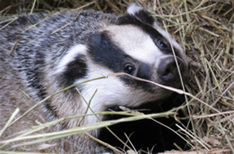badger friendly dairy products veggies co uk