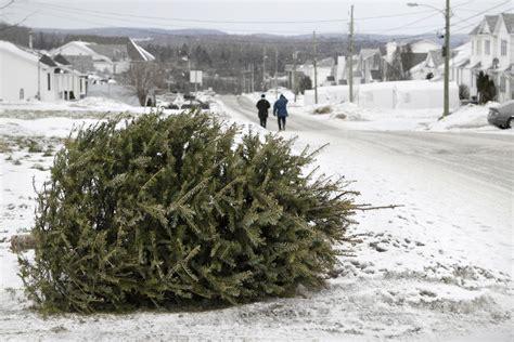 weihnachtsbaum entsorgen termin nicht verpassen garten
