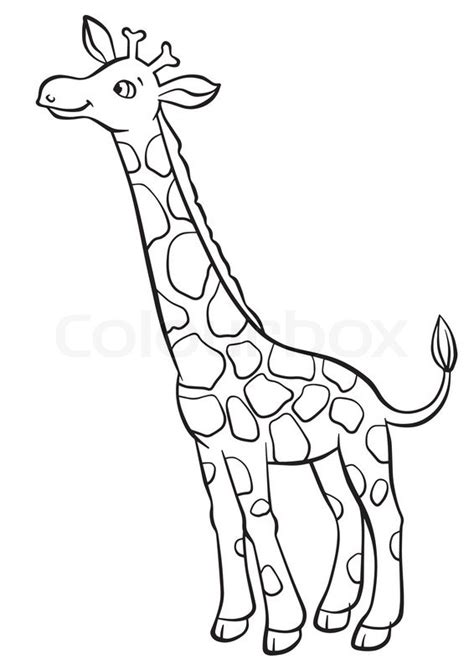giraffe eating coloring pages cute giraffe eating leaves from the tree stock vector
