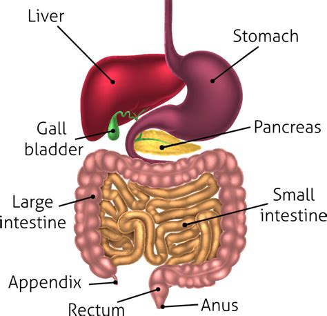 gut intelligence the wisdom to the the guts to do something about it books or thin can the bacteria in our gut affect our
