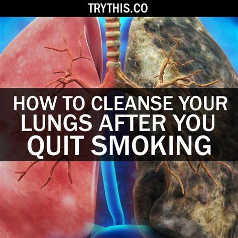 How To Detox From Quit Smokeing by How To Cleanse Your Lungs After You Quit