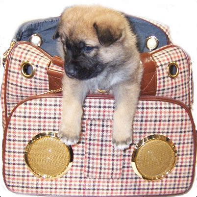 Lifepop Stereo Pet Carrier by Lifepop S Stereo Pet Carriers The Oscar Spotlight