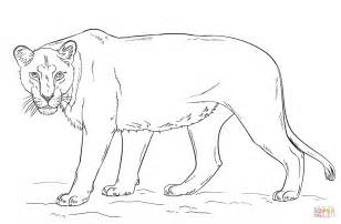 Lioness Coloring Pages lioness coloring page free printable coloring pages