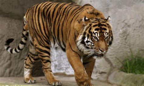 Animals Of The World Buku Tentang Hewan Dunia 10 hewan langka yang dilindungi di indonesia satu jam