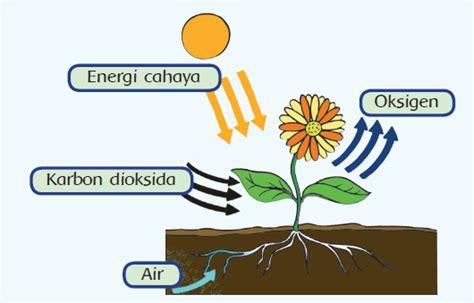 Buku Sakti Biologi Dan Kimia Smp kumpulan praktikum ipa sd smp dan sma arsip kurikulum 2013