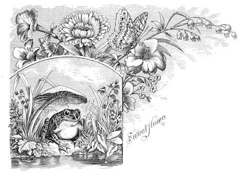 the graphics fairy llc vintage clip art wonderful the graphics fairy llc free antique clip art frog