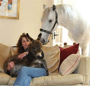creature comforts horse devon woman cuddles baby donkey in her own house as pet