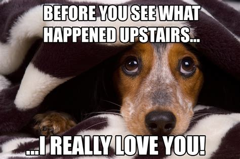 Silly Dog Meme - love your pet love your life july 2016